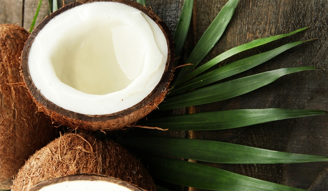 Coconuts to be imported on a trial basis