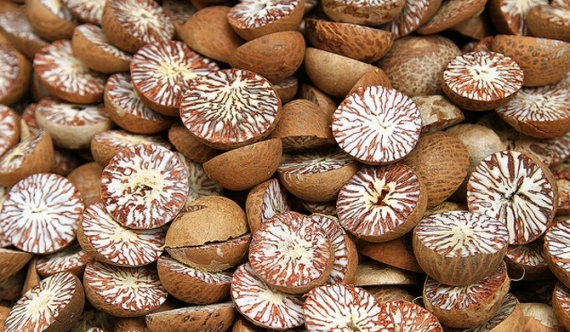 Areca nut permits contrary to Cabinet orders