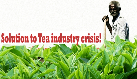 Solution to Tea industry crisis!