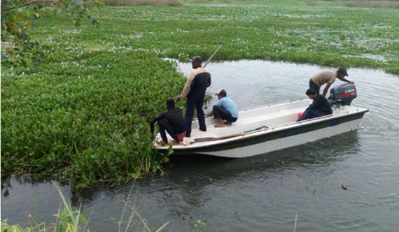 Freshwater weed surge in Puttalam