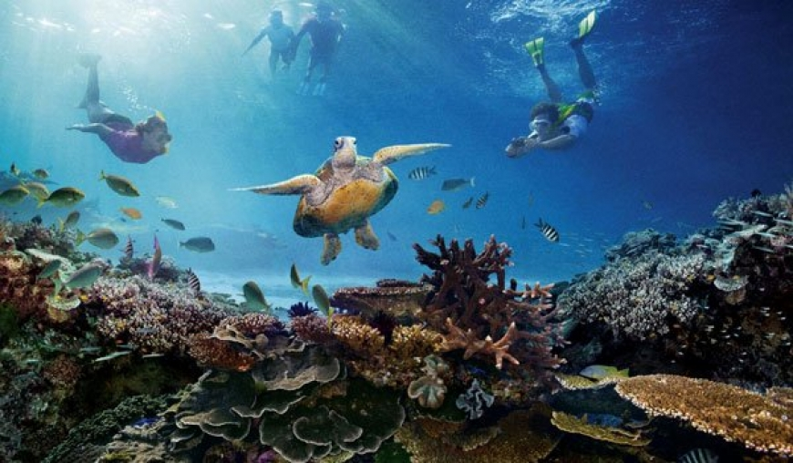 Great Barrier Reef alive, but crisis remains