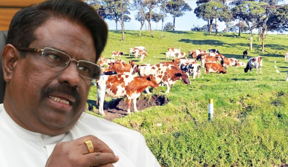 Minister Soyza too, gets imported milch cows