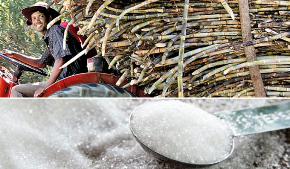 Lanka Sugar Company makes profits