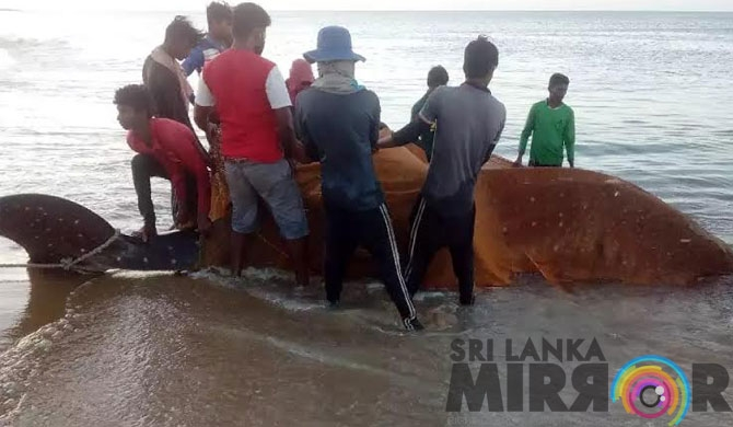 Strange fish caught in sea off Mulliwaikkal (pics)
