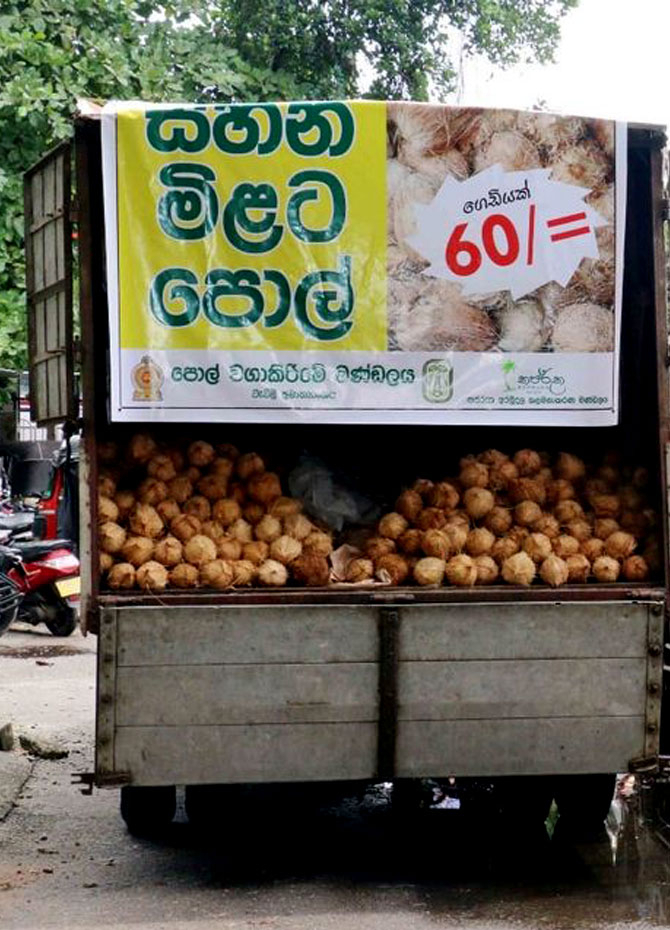 Coconuts provided at Rs. 60! (Pics)