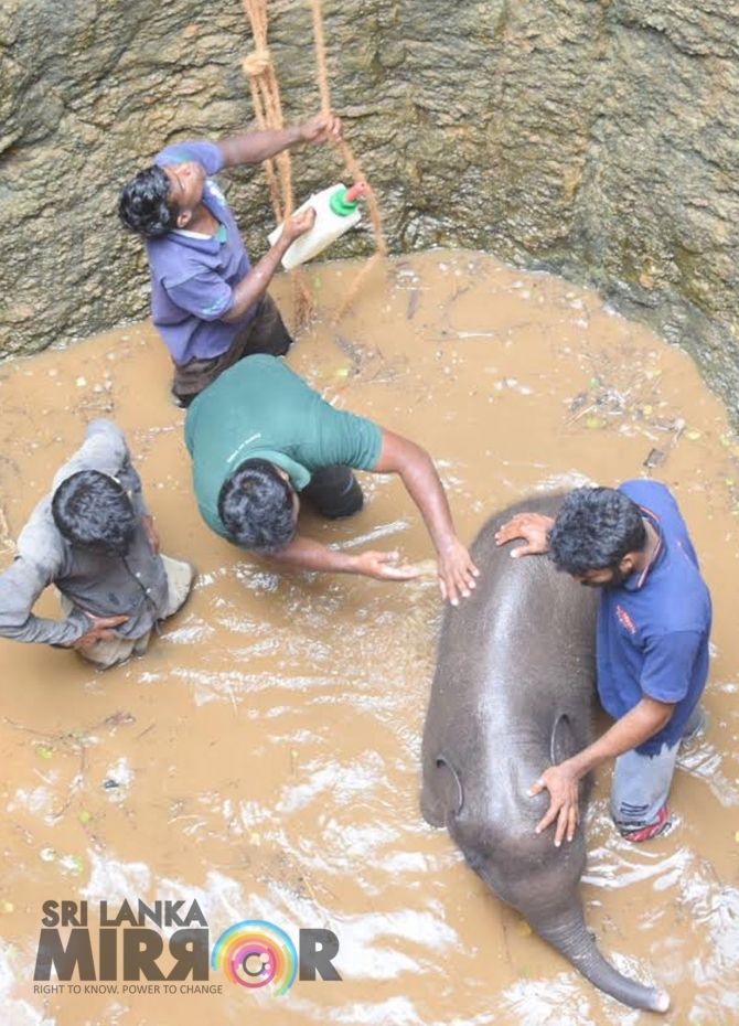 Seven hour  operation to rescue elephant