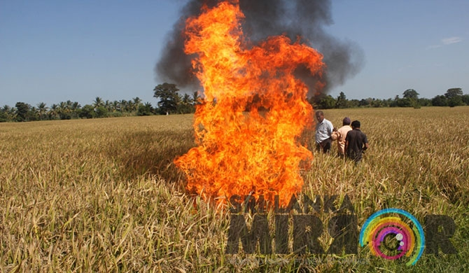 300 acres of pest-infested paddy land set on fire