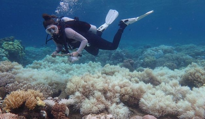 Bleaching damages 2/3 of Great Barrier Reef