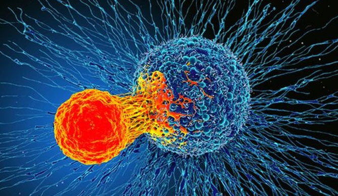 Immune discovery 'may treat all cancer'