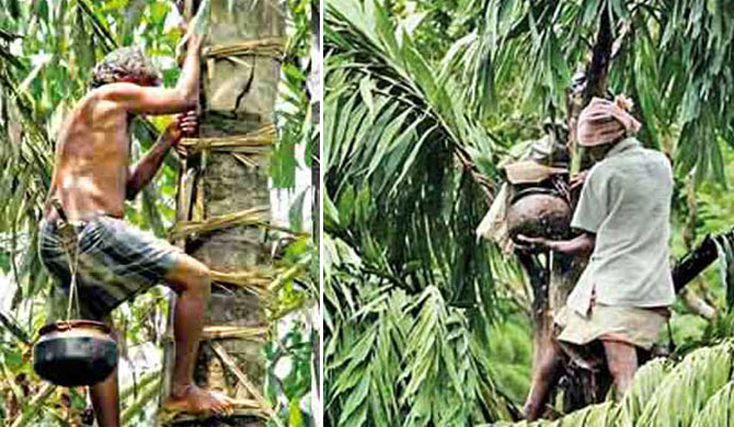 Police directed not to act on Kithul toddy tappers