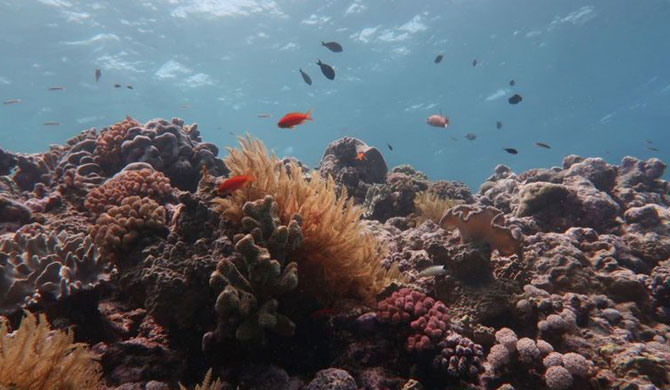 Great Barrier Reef has lost over half its corals