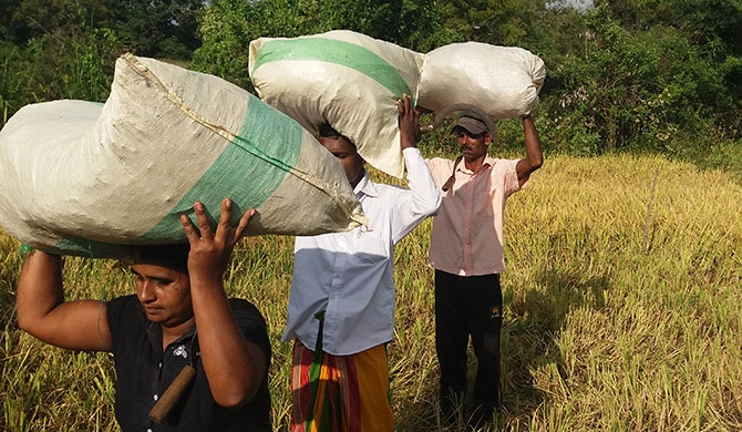 3,000 kg of paddy to be bought from each farmer
