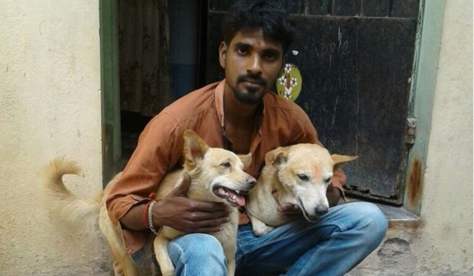 'Hero' street dogs help catch criminal