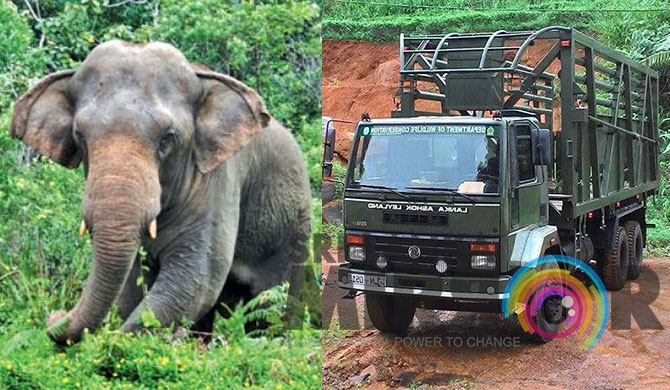 Last 2 jumbos in Sinharaja to be relocated