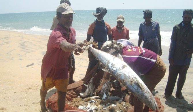 Kalpitiya drag net fishing in danger (Pics)