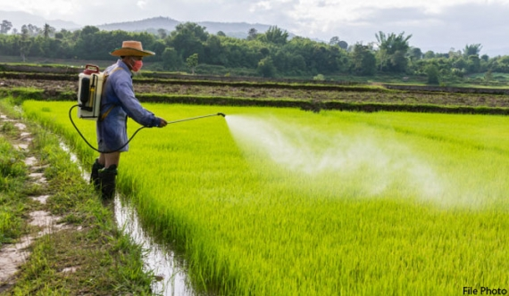 Don't use herbicides with same code consecutively, Dept of Agriculture