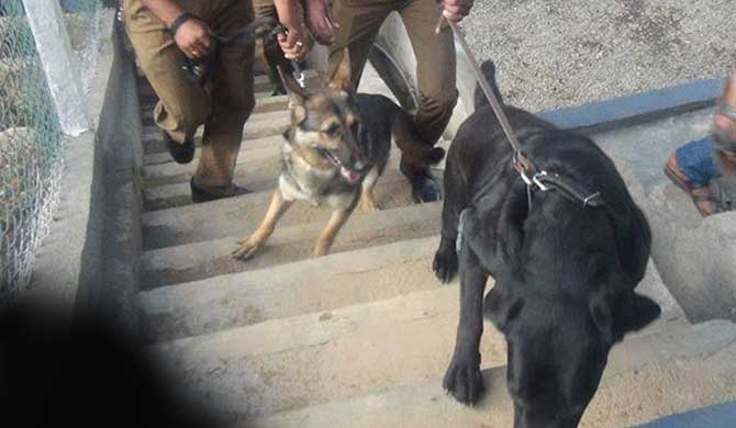 Canine help to quell drug menace in prisons, backfire