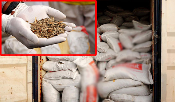 Customs seize 28 container loads of agro-plant waste sent from Ukraine