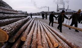 Climate change: China's forest carbon uptake 'underestimated'